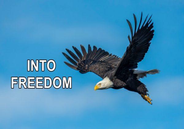 Into Freedom - Week 3 Image